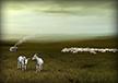 Goat Herders
