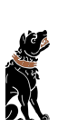 Molossian Dogs