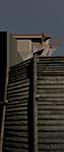 Бастионный онагр