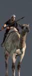Camel Lancers