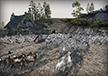 Venedi Goat Herd