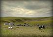 Herders' Yurts