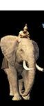 Éléphants d'Afrique mercenaires